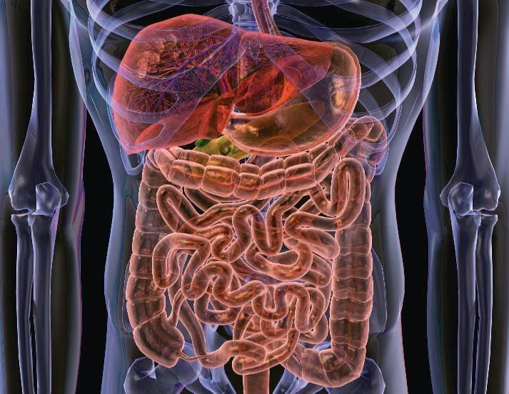 flora-intestinal-3